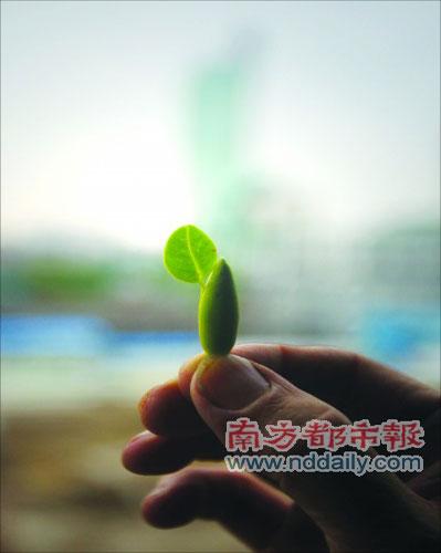 佛山/前日(8日),一枚特殊的白兰花蕾和禅城市民梁老伯相遇,让这位...